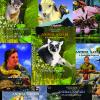 animal safari all Animal Safari Eight Volume Series
