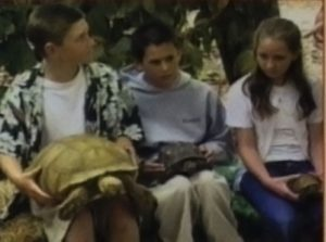 as5-tortoise