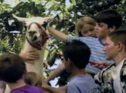 as6 llama Animal Safari - Vol. 6 Animals and Man